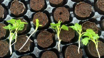Propagación de Plantas